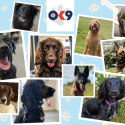 Dogs to be used to combat poor mental health in policing